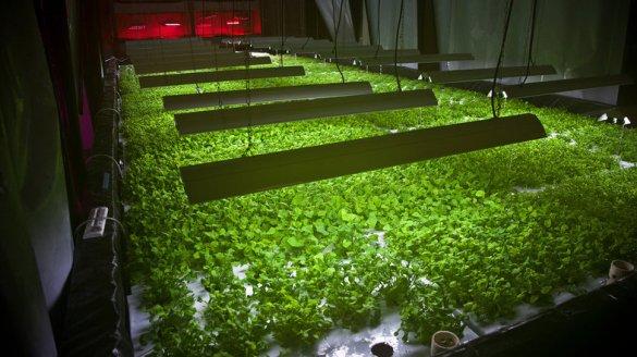 Plant Chicago, NFP/Rachel Swenie